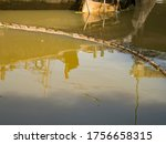 Small photo of buoy entrap garbage in canal , prevent wastrel float to the sea