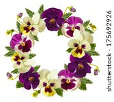 Beautiful Pansy flowers wreath on a white background. Floral frame. - stock photo