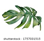 the isolated watercolor green... | Shutterstock . vector #1757031515
