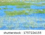 Swamp Landscape In Nature Park...