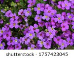 Lovely Picture Of Purple Flowers