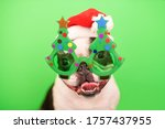 Small photo of A happy and cheerful Boston Terrier dog in a Santa Claus hat and decorative glasses in the form of a Christmas tree on a green background.