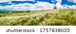 Panorama Landscape Of Meadows...