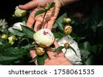 Female\'s Hands Holding An...