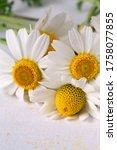 macro chamomiles in scattered... | Shutterstock . vector #1758077855
