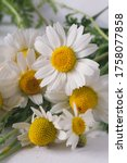 macro chamomiles in scattered... | Shutterstock . vector #1758077858
