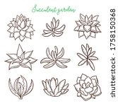Succulents. Cacti Line Drawn On ...