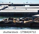 Pier 39  San Francisco  Usa  26 ...