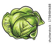 colorful cabbage illustration... | Shutterstock .eps vector #1758484688