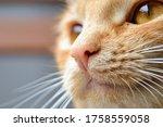Cat's Face Close Up. Close Up...