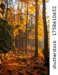 Autumn Forest Sunset In...