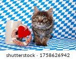 Brown Kitten On Blue White...