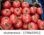 Beautiful Large Red Tomatoes On ...