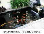 Minimalist Koi Fish Pond ...