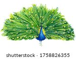 Beautiful Peacock Drawing With...