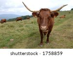 cow on a meadow  vosges... | Shutterstock . vector #1758859