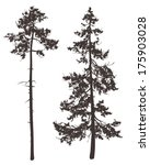 silhouettes of two pine trees...   Shutterstock .eps vector #175903028