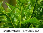 Photography Of Monstera...