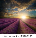 stunning summer sunset over... | Shutterstock . vector #175908155