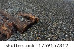 Photo Of Driftwood On The Sea...