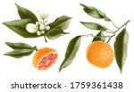 Juicy Orange Fruit With White...
