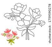 dahlias pink  hand drawn black...   Shutterstock .eps vector #1759590278