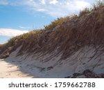 Dune Grasses On A Beach Dune I...