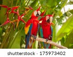 Scarlet Macaw Parrots On The...