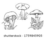 Edible And Poisonous Mushrooms...