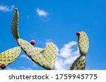 Cactus Bud Against A Blue Sky
