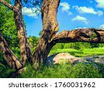 A Large Branch Split From The...
