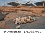Sea Shells And Small Stones In...