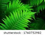Beautyful Ferns Leaves Green...