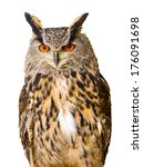 Stock photo eagle owl isolated on white background 176091698