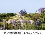 Purple Flowers   Scilla...