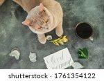 Scottish Kitten And Coffee Mug...