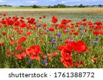 A Colourful Field Of Wild...