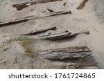 A Closeup Shot Of Driftwood On...