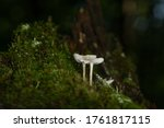 Two Mushrooms In The Dark Forest