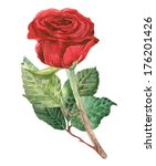 red rose watercolor painting | Shutterstock . vector #176201426