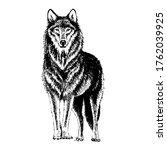 Wolf Engraving Illustration....