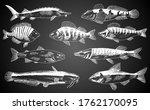 Hand Drawn Fish. Fish And...