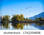 A Group Of Migratory Birds Are...