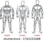 men body types diagram with...   Shutterstock .eps vector #1762231688