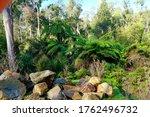 Australian Bushland At Badger...