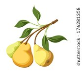 Pears On A Branch. Vector...