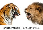 Side View Of A Lion And A Tiger ...