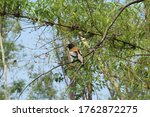 Small photo of beautiful gird in natural forest of tadoba