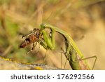 Insect Outdoor  Mantis...