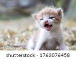 Newborn Cats Play In Nature. A...